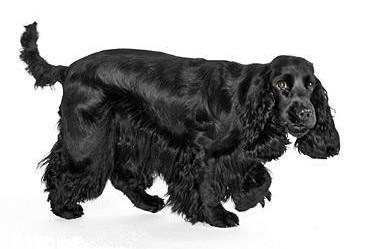 AmazingDogs - Hondentrimsalon - Honden- en kattentrimster